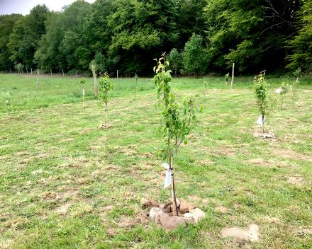 De aanplanting van de fruitboomgaard op het zorgvrij vakantiedomein La Grande Roche