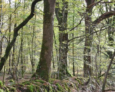 Geniet van een wandeling op het bocage pad doorheen het domein La Grande Roche