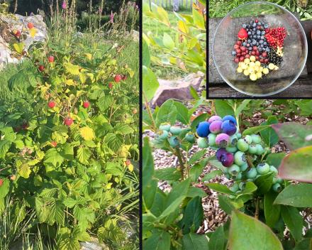Geniet van lekkere, verse en natuurlijke snoep van de fruitgaard van La Grande Roche