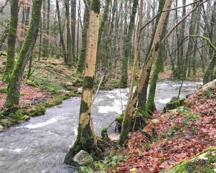 La Cance, de stroom door het bos van het zorgvrije vakantiedomein La Grande Roche. Deze loopt tot aan de Cascades of waterval in Mortain 3 km verderop. Vrij te bezoeken.