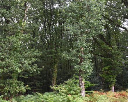 Het bos van het domein La Grande Roche, een oase van groen en rust. Ideaal voor je zorgvrije vakantie