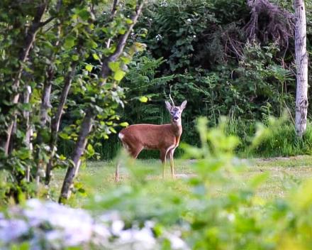 Zelfs wilde dieren zoals reeën voelen zich in La Grande Roche op hun gemak