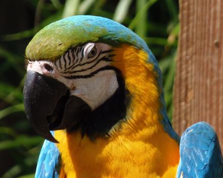 De zoo van Champrépus_,een superleuke activiteit voor jong en oud tijdens je verblijf te La Grande Roche