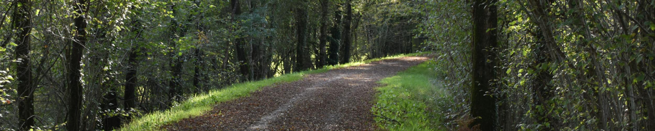 Kom tot rust tijdens een mooie wandeling in de natuur