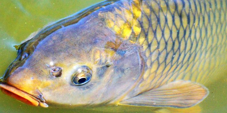 De visvangsten die je kan doen op de visvijver van La Grande Roche