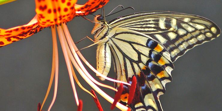 Fotoalbum van gespotte dieren, planten en natuurgerelateerde onderwerpen van La Grande Roche